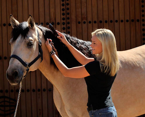 woman brushing horse mane
