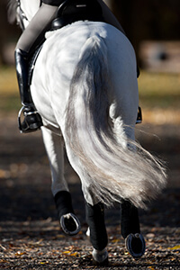 rider on horse, view of hooves