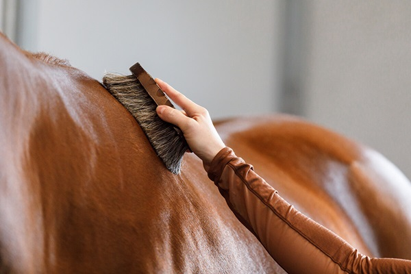 horse being brushed