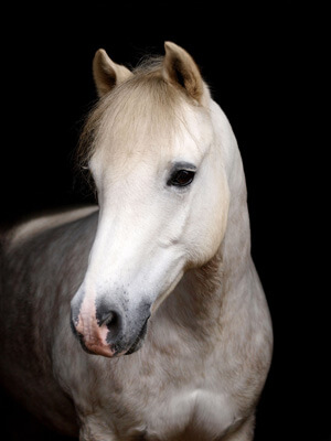 pretty horse with healthy coat