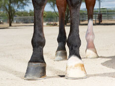 Nutrition and A Horse's Hoof