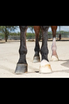 horse legs and hooves