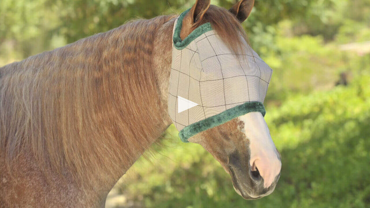 Ultimate Horse Care - Fly Control 101