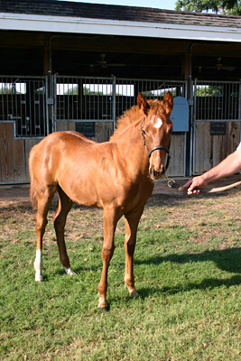 foal outside stables