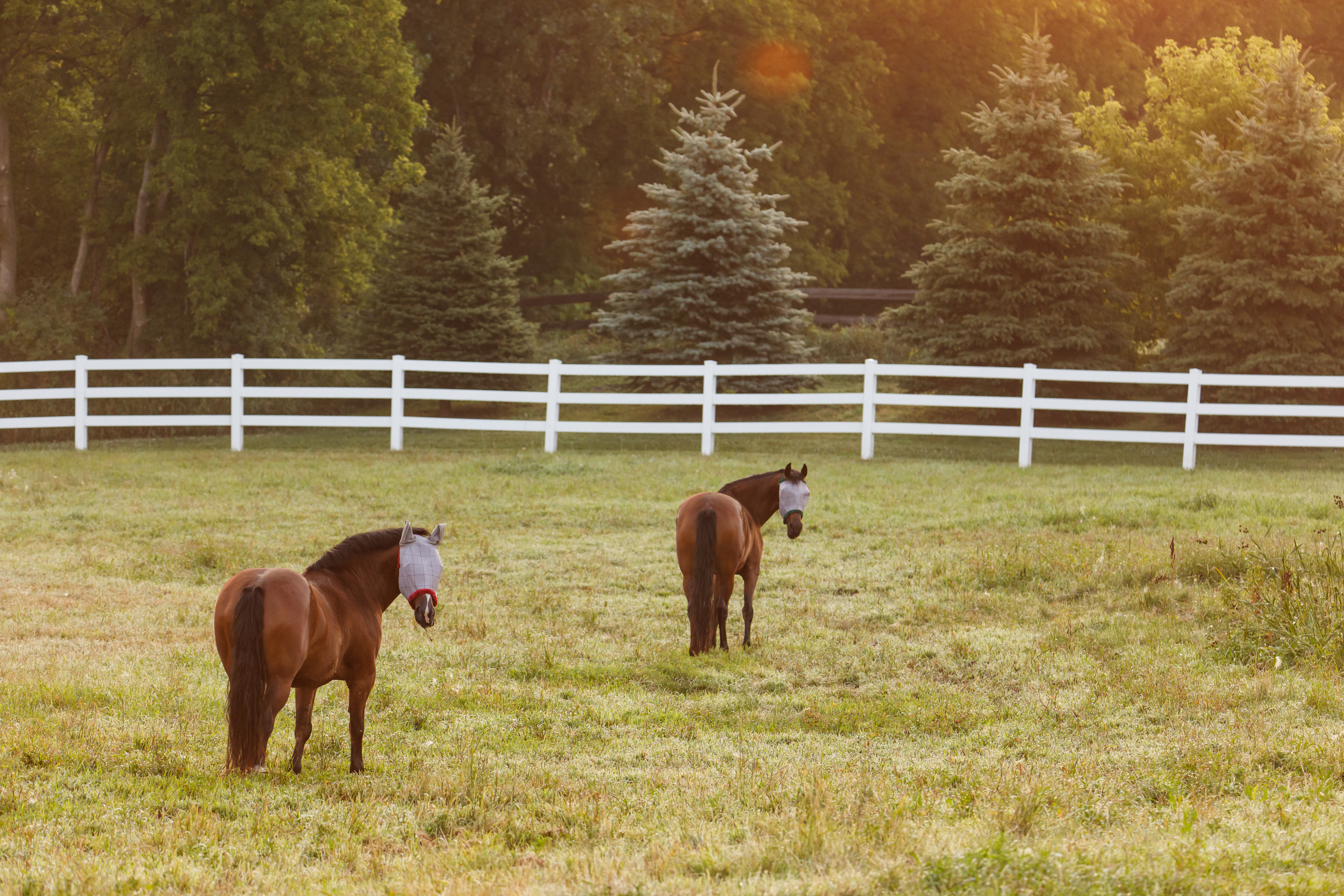 Horses in pasture with fly masks.