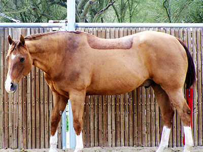Senior Horse Care: Your Older Horse's Changing Diet