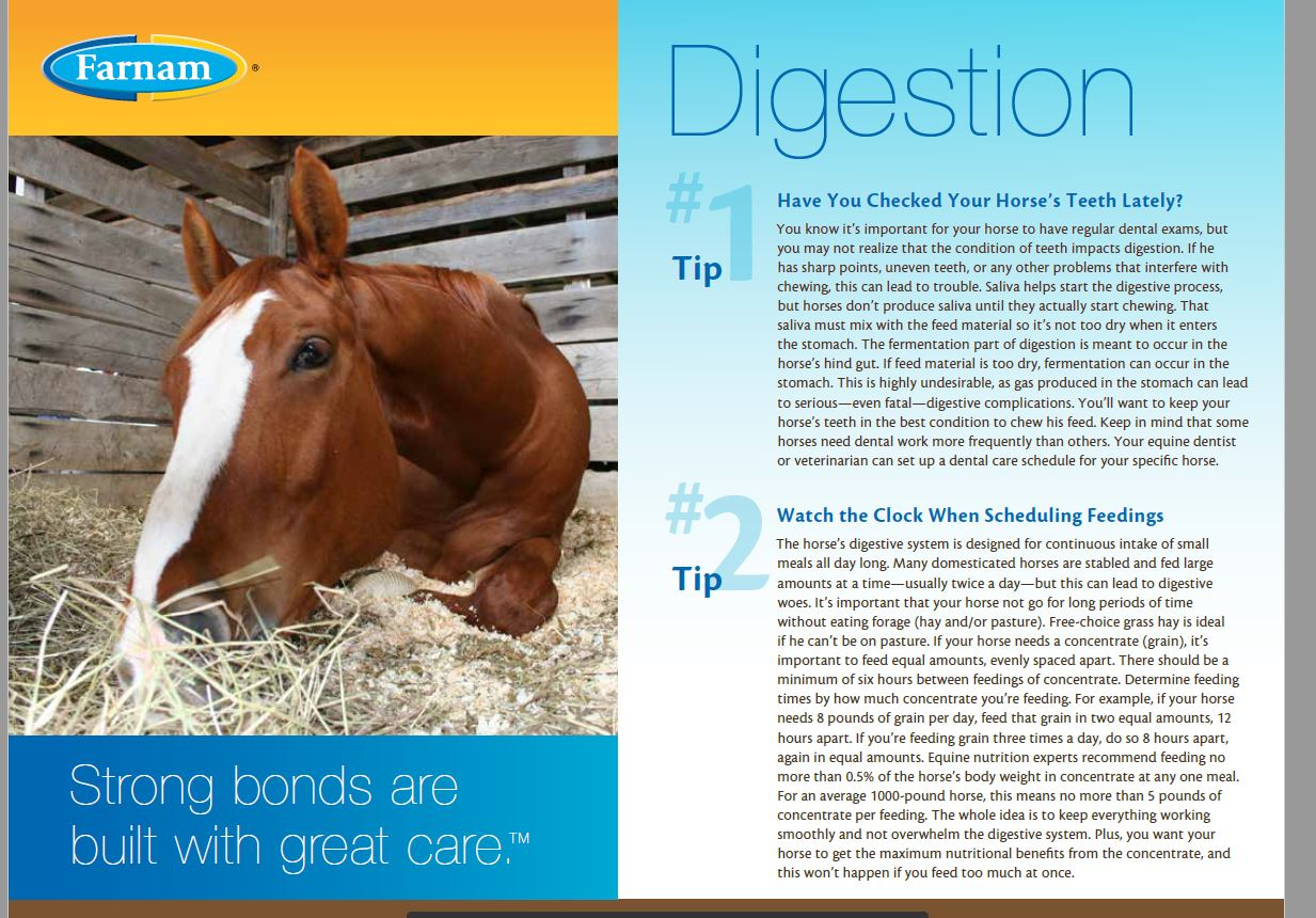 Have You Checked Your Horse's Teeth Lately?