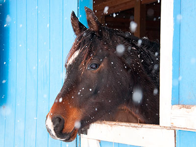 horse in stable during winter